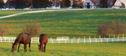 horse-paddock-showcase-be3fed5a