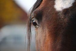 occhio_cavallo-f87d7d46