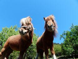 pony-a8182911