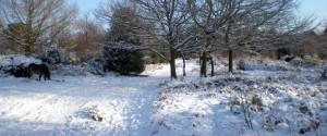 Sutton Park in snow