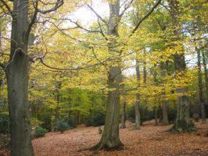 autumn-colours-sutton