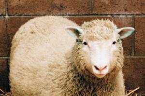 Metodo Dolly e le prime staminali umane