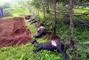 Nuovo attacco del Chupacabras in Alagoas Brasile