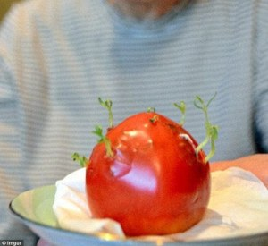 Fukushima: crescono vegetali mutanti nei pressi della centrale atomica