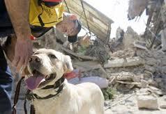 """Gli animali possono """"prevedere"""" i terremoti?"""