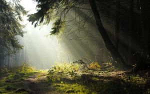 Scoperto villaggio di gnomi nella foresta di Komi