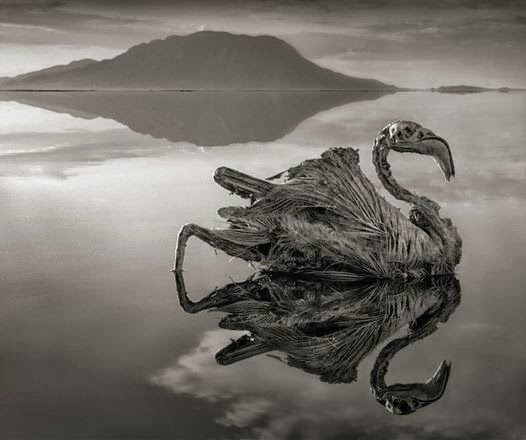 """Il lago """"della morte"""" che trasforma gli animali in statue!"""