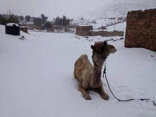Egitto sotto la neve, non succedeva dal 1639