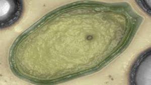 Siberia, virus gigante si risveglia dopo 30.000 anni
