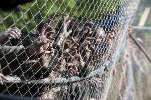 Il Pentagono ha un piano per fermare l'apocalisse zombie