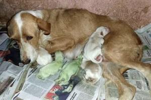 Spagna: nati due cuccioli di cane con pelo verde