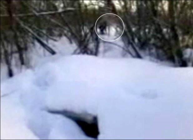 Svelato il mistero dell'abominevole uomo delle nevi