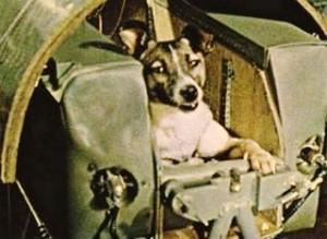 Sola e impaurita Laika non ha resistito oltre il lancio