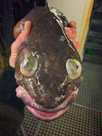 Pescatore Russo pubblica scatti di strane creature degli abissi 1