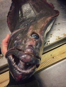 Pescatore Russo pubblica scatti di strane creature degli abissi 27