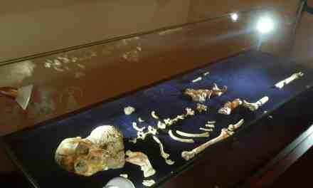 Australopithecus sediba: Nuevo hominido
