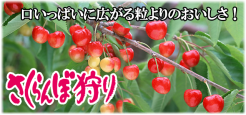 top_cherry