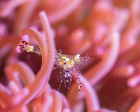 Kauneimpia sukelluskohteita Filippiineillä