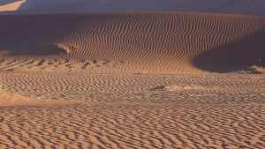 red sand dunes at sunset, long shadows highligh the zebra stripes in sand