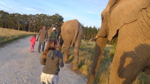 Jacob and Quinn walk with their elephant ahead of Mackenzie and Amy's elephant