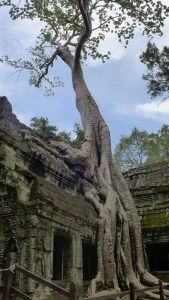 Tree roots spill down the side of the ruins of a temple