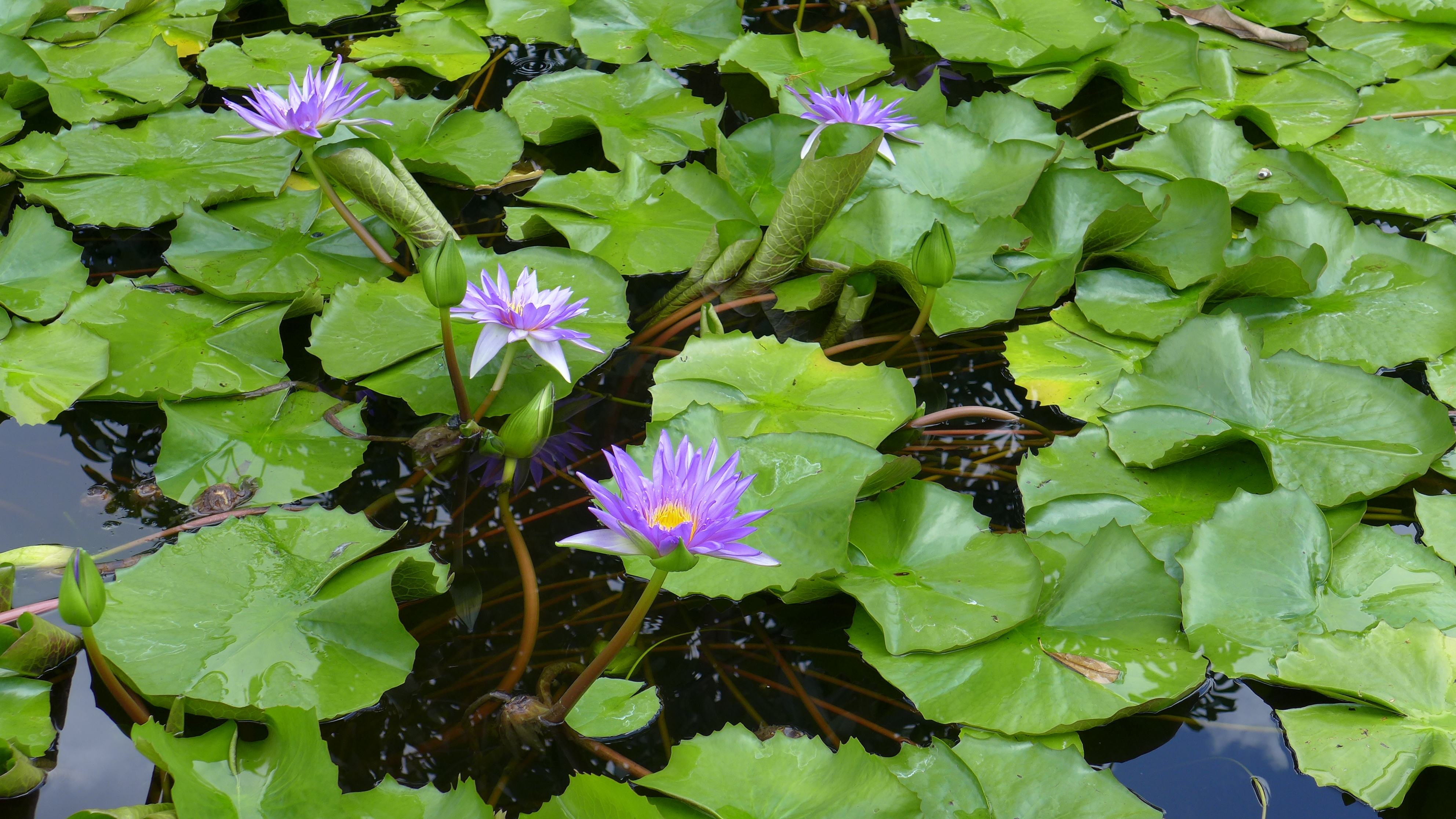 From the mud blooms a lotus flower seize the dav from the mud blooms a lotus flower izmirmasajfo