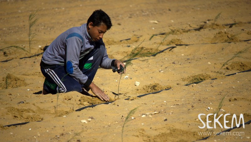 SEKEM combats desertification