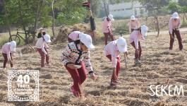100% nachhaltige Landwirtschaft in Ägypten: SEKEM-Kinder beginnen Zukunftsvision umzusetzen