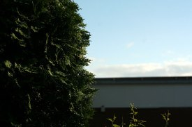 Conifer-Dream-14