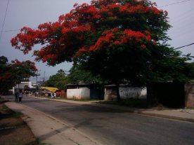Letzte-Fotos-3-Straße-heller-mit-rotem-Baum
