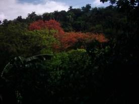 Letzte-Fotos-4-Wald-mit-rotem-Baum