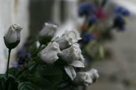 Venedig Blumen Ausw07