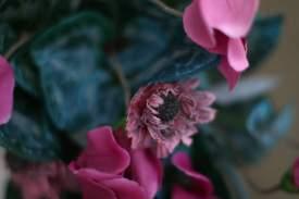 Venedig Blumen Ausw18