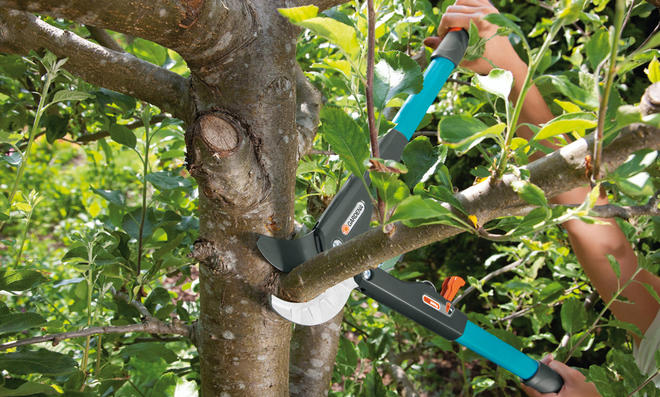 Baumschnitt  selbstde