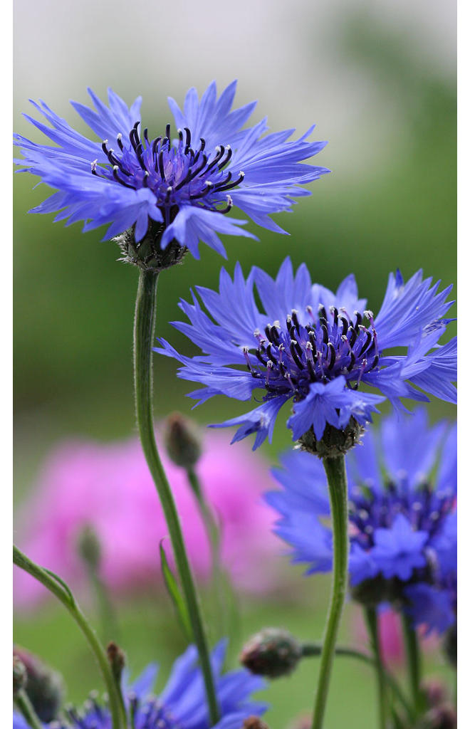 Sommerblumen  selbstde