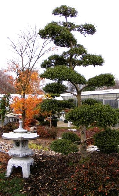 steingarten anlegen gestalten rhododendron arten und sorten f r,
