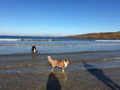 Border Collie enjoying empty beach