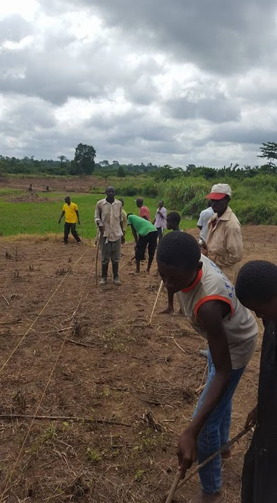 a group of farmers plant crops on demonstration plots