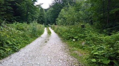 Path to Dr. Weissner Trail - Rychleby Trails