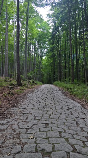 Romantic forest stone path