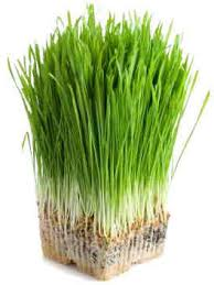 We use gluten-free barley an wheat grass extracts