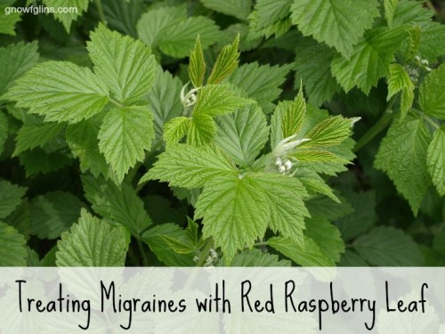 How To Treat Migraines With Red Raspberry Leaf