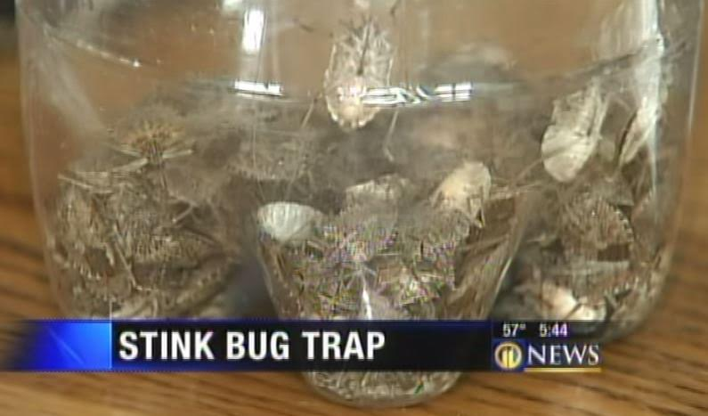 Image result for bug trap