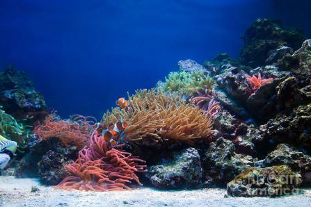 5-underwater-life-michal-bednarek