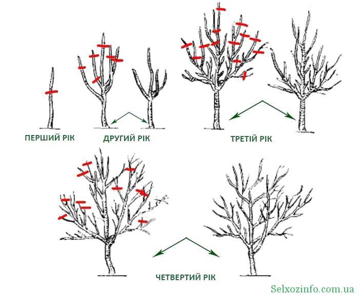 Як правильно обрізати дерева