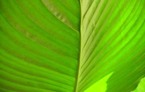 polyethylene-vert