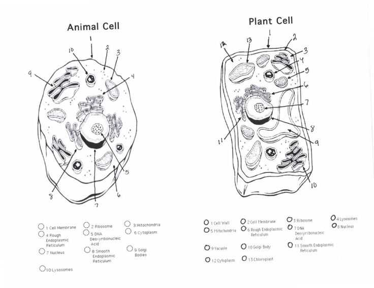 Animal and Plant Cells Worksheet Answers as Well as 93 Best Cell Structures Images On Pinterest