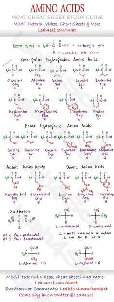 Biochemistry Basics Worksheet Answers with Mcat Amino Acid Chart Study Guide Cheat Sheet for the Biology