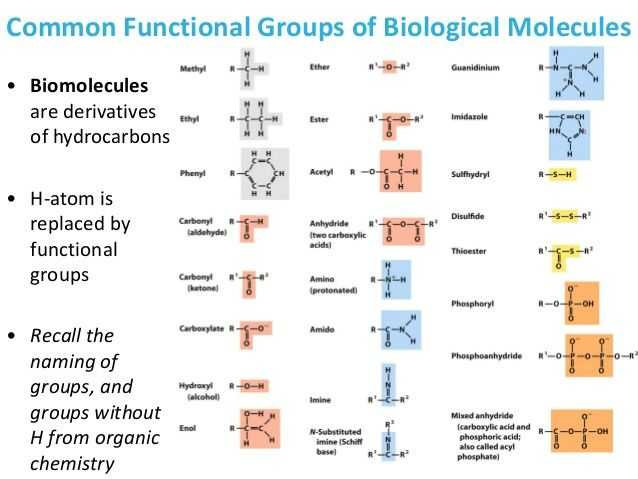 Biological Molecules Worksheet and 13 Best Biology Images On Pinterest