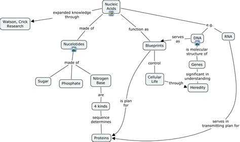 Biomolecules Concept Map Worksheet or Concept Map Nucleic Acid